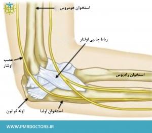 ساختار طبیعی آرنج