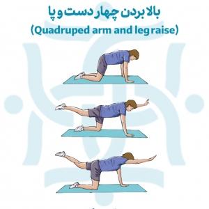 بالا بردن چهار دست و پا در تمرینات ورزشی در درمان درد بالاتراز کمر