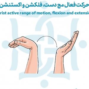 حرکت فعال مچ دست، فلکشن و اکستنشن