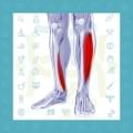 شین اسپلینت (درد ساق پا)