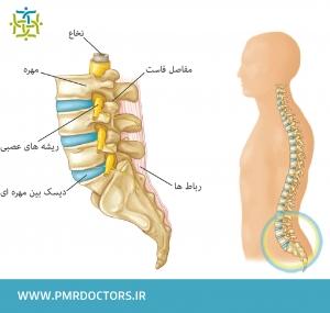 آناتومی ساختار ستون فقرات
