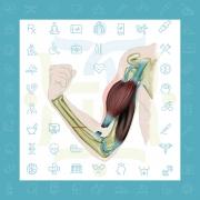 پارگی تاندون عضله دو سر بازویی در آرنج